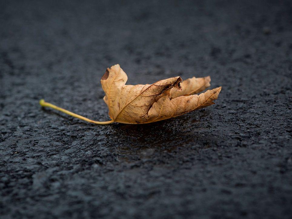 Hoja en el asfalto