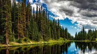 Vigilancia y gestión de los bosques para frenar el cambio climático