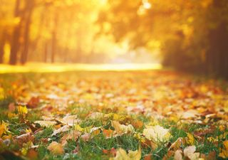 UK weekend forecast: the mild weather continues