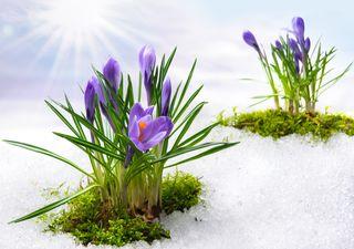 Prognose für den Frühling 2021: Sonnig, trocken und sehr warm!