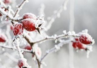 Schreckliche Wetterkarten: Wetter bis Mai kühl und wechselhaft!