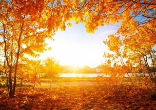 Kommt die Sommerwärme wieder und bringt uns den goldenen Herbst?
