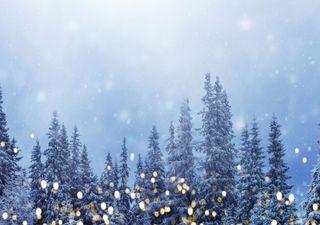 Schneetief an Weihnachten oder Frühlingserwachen!