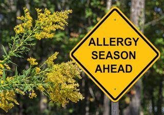 When will hay fever season end this year?
