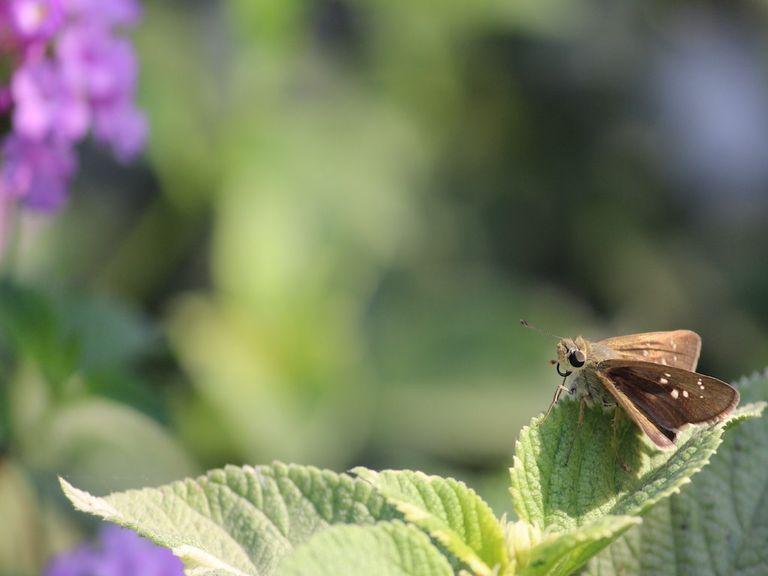 Day moth.