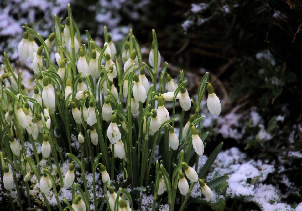 Winter oder Frühling