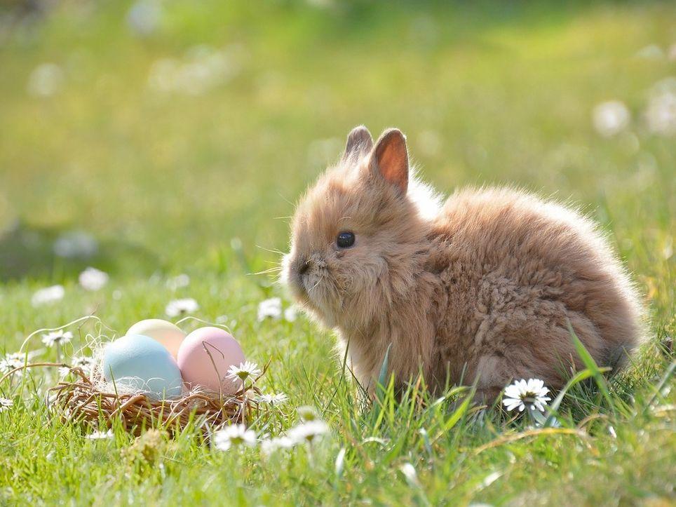 Schwitzt der Osterhase?