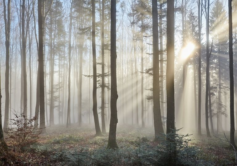 Fog UK.