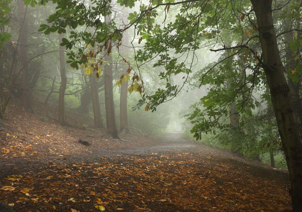 Fog in autumn.