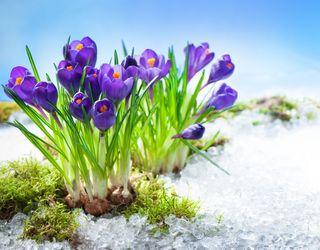 Wintereinbruch im März: Was kommt nach dem Mega-Frühlingswetter?