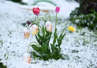 Wintereinbruch mitten im Mai: Schnee und Nachtfrost!
