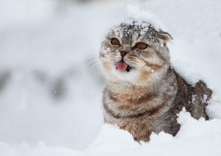 Wintereinbruch am Wochenende: Der Schnee kommt zurück!