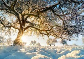 Winterprognose: Endlich wieder ein Schneewinter?