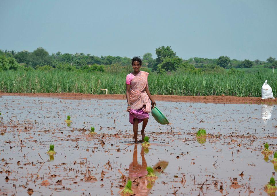 Lebensmittelknappheit, Nahrungsmittelknappheit, Klimawandel, Nahrungsmittelproduktion