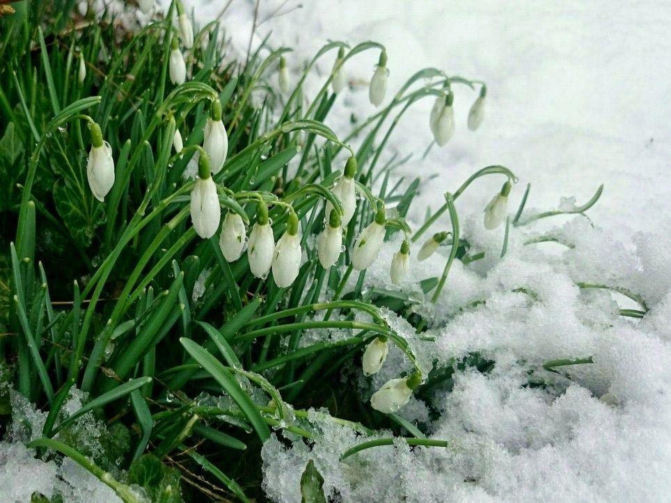 Frühling auf Eis