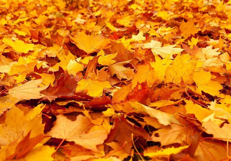 Las hojas secas realizan una importante labor ecológica.