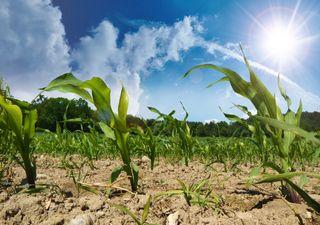 Zuerst Hochwasser im Süden, dann Hitze und Trockenheit!